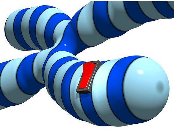 cartoon genomic function